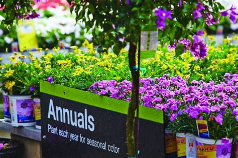 what is the difference between annuals perennials the