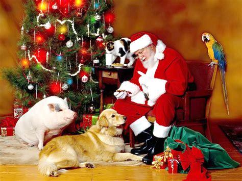 christmas wallpaper with animals 1024x768 desktop wallpapers