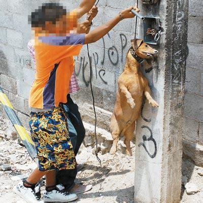 imagenes de animales maltratados maltrato a los animales violencia social