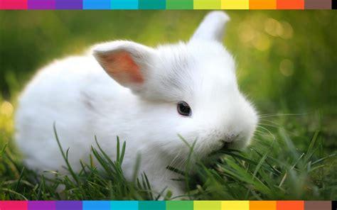 gabbia dei conigli sognare conigli appena nati oppure un coniglio gigante