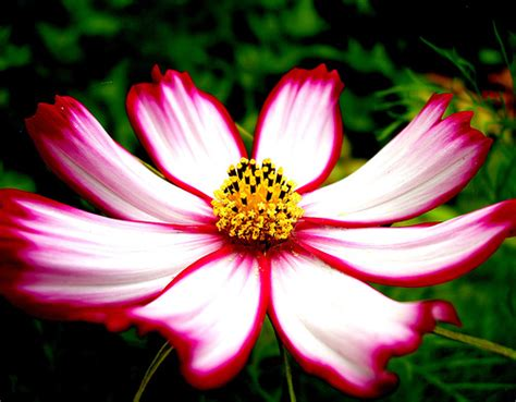 11 beautiful pictures of flowers project 4 gallery abbey s computer graphic projects flower st
