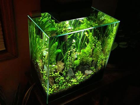 shrimp tank aquascape 46 best images about aquascape fluval edge 46 on pinterest