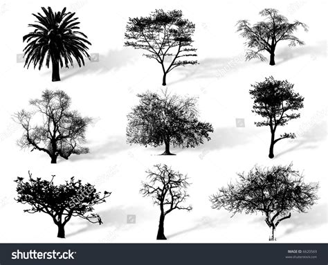 what does a tree represent trees silhouettes to represent different species in nature