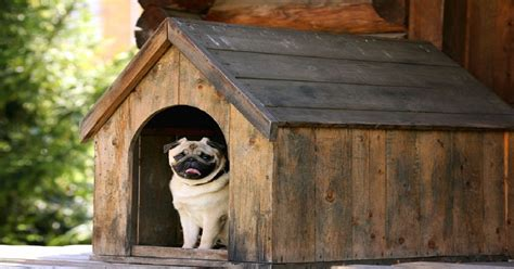 the best dog houses building the best dog house for your pet dogalize