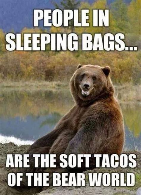 Bears Memes - funny quotes about bears quotesgram