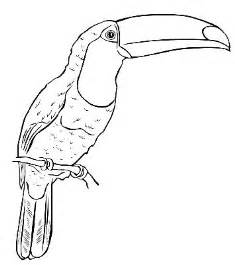 toucan toucan 2 colouring pages