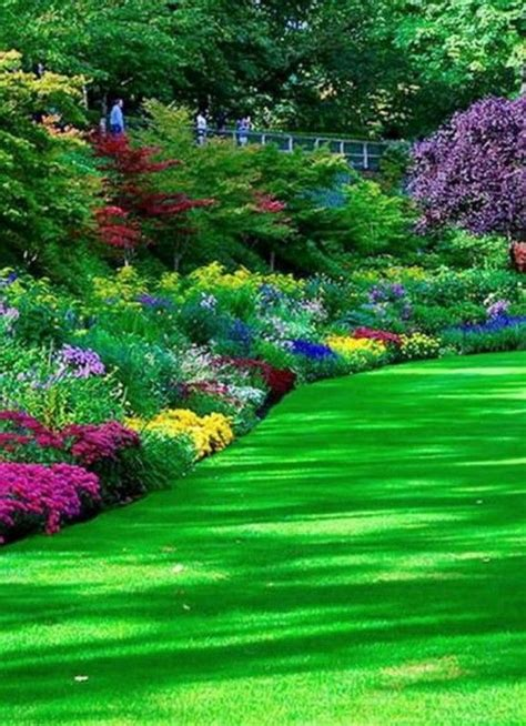 flowers garden photos 157 best garden images on landscaping gardens
