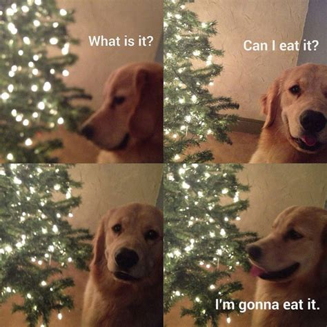 Christmas Dog Meme - a few funny animal pictures to put a smile on your face