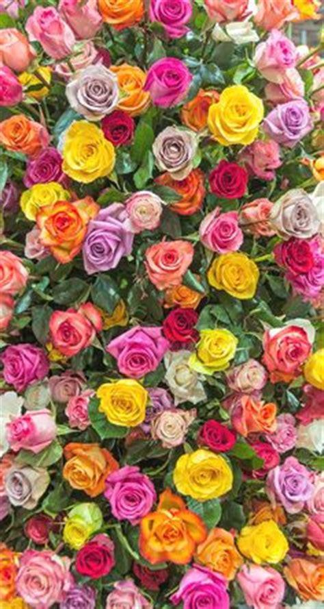 rose pattern screen lock flowers on pinterest iphone wallpapers phone wallpapers