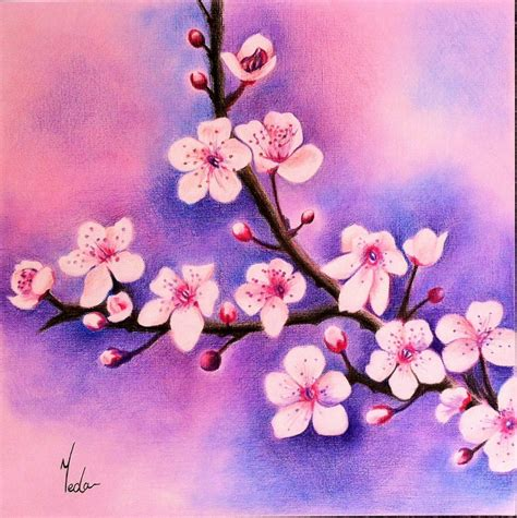 colored drawings cherry blossoms original coloured pencil beautiful
