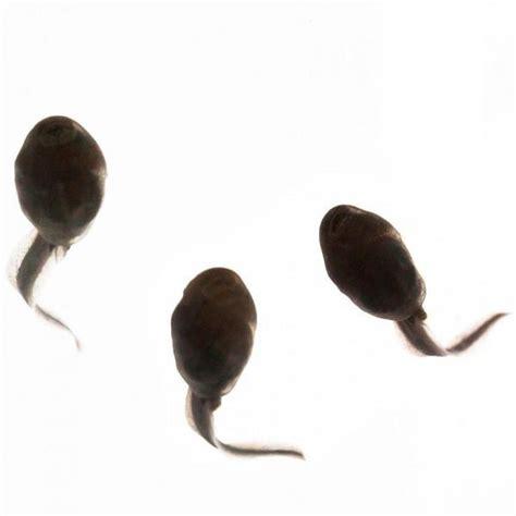 frog tadpoles eat