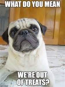 Pug Meme - 8 funny pug memes what every dog deserves