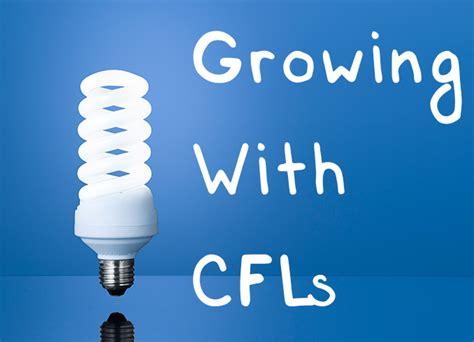 cfl grow lights  beginners guide  growing  cfls