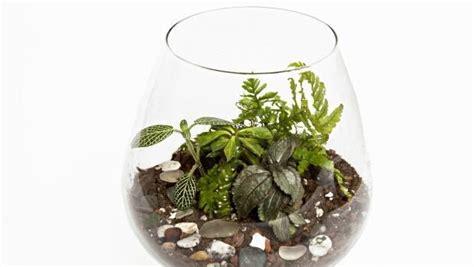 giardini in bottiglia un giardino in bottiglia o in barattolo