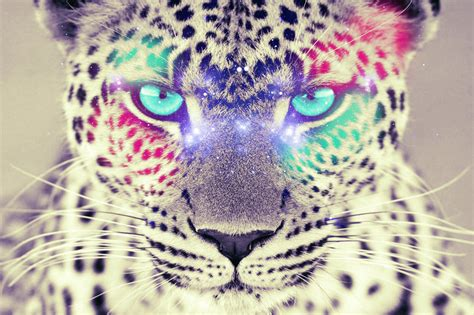 colorful leopard wallpaper colorful leopard by fepame on deviantart