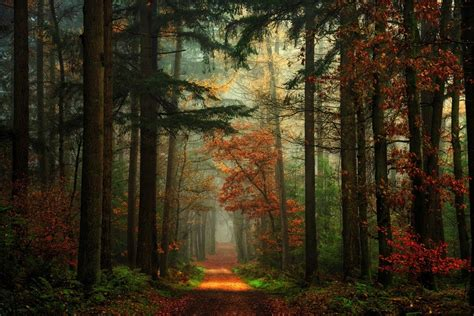 path forest fall nature mist red green landscape