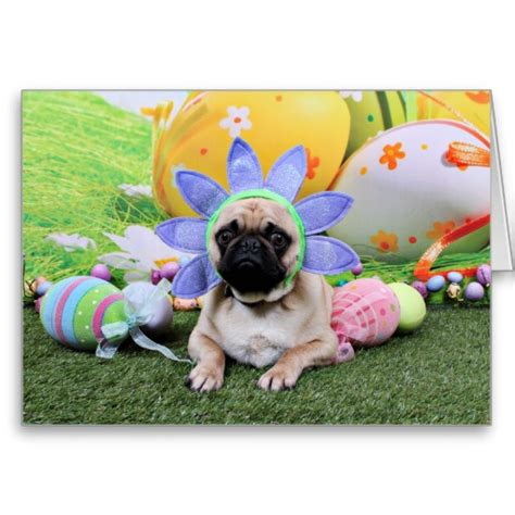 easter pug resting easter pug photo and wallpaper beautiful resting easter pug pictures