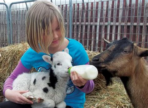 starting  petting zoo business countryside