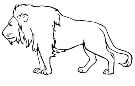 male lion coloring pages male lion coloring page supercoloring com