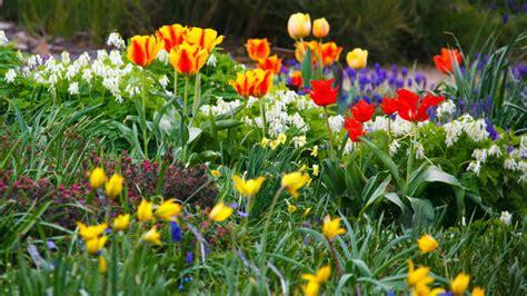 preparing  spring garden     early