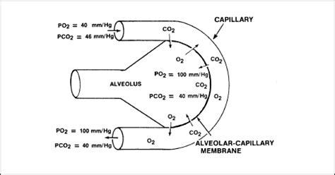 partial biography definition arterial oxygen partial pressure definition