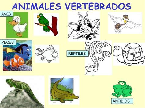 imagenes de animales inbertebrados animales vertebrados e invertebrados cristyna