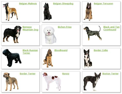 medium sized breeds list of all medium sized dogs breeds breeds of dogs upcomingcarshq
