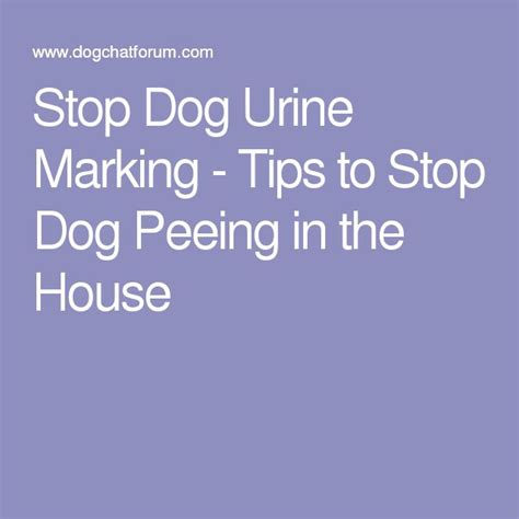 dog marking in the house the 25 best ideas about cleaning dog pee on pinterest i