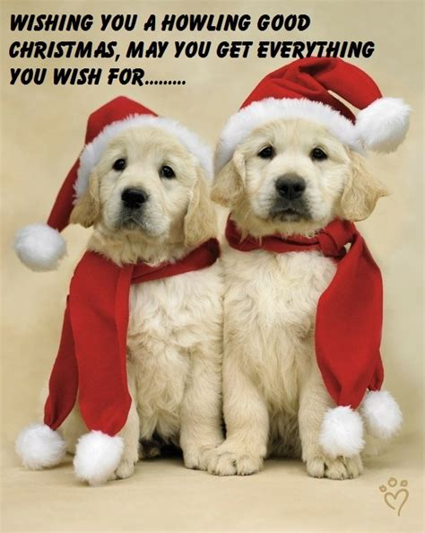 images  dog christmas cards  pinterest holiday cards card sayings  funny