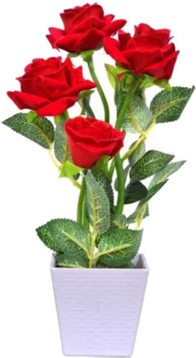 naturo bonsai imported red rose plant seed price  india