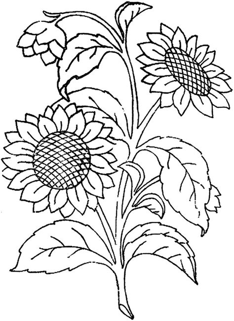 Outline Of Sunflower To Colour by 1886 Ingalls Sunflower This Image Came From Embroiderist S Flickr