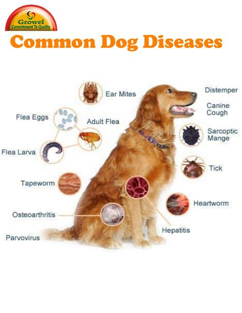 disease in dogs lyme disease in dogs images