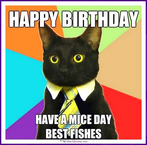 Birthday Cat Memes - happy birthday memes with funny cats dogs and cute animals