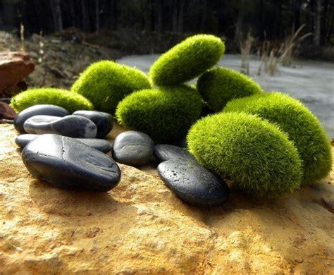 zen garden starter kit 7 faux moss rocks and 1 pound of black