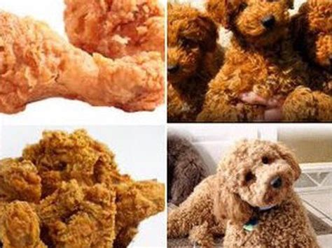 fried dogs don t eat these dogs memes show similarities between food and pups cnet