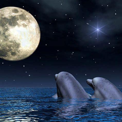 imagenes de amor animadas de delfines dibujos de delfines tiernos imagui