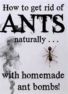 how to get rid of ants naturally with ant bombs