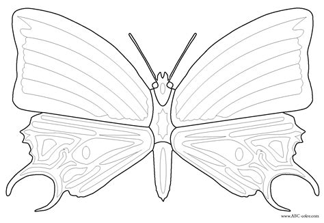 mosaic butterfly coloring pages free butterfly mosaic coloring pages
