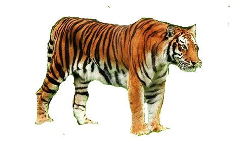 Imagenes Animales Sin Fondo   proyecto animales de mi zool 243 gico