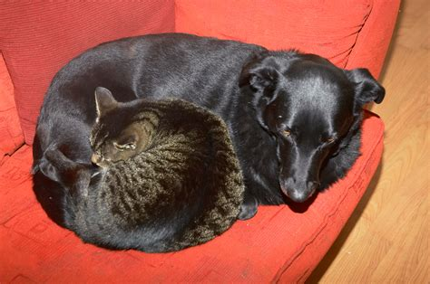do cats and dogs get along cats dogs living together
