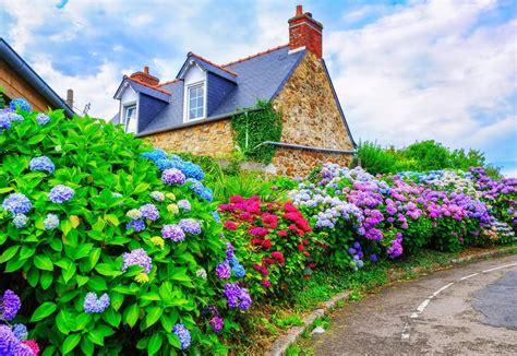 Carset 3 In Hug Flower Dress Hotpink 35 hydrangea garden ideas pictures