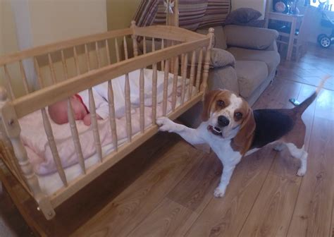 dog in baby swing dog puts his baby sister to sleep in a swing crib youtube