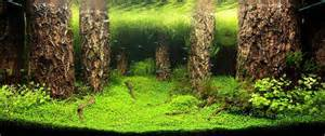 Forest Aquascape by The Top 25 Ranked Freshwater Aquariums In The World