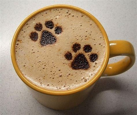 dogs and coffee coffee paws raining cats and dogs