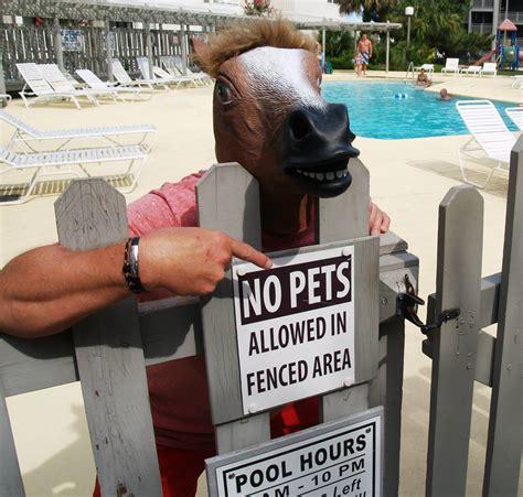 Meme Horse Head - horse head mask meme hot girls wallpaper