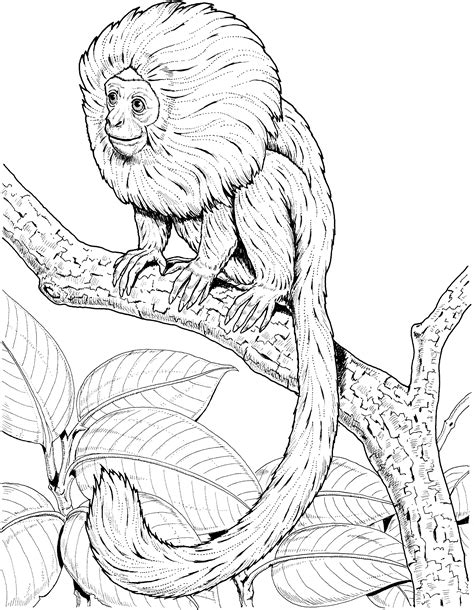 colobus monkey coloring page colobus monkey coloring page coloring pages