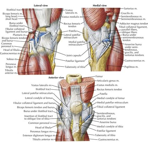human knee diagram knee ligament diagrams to print diagram site