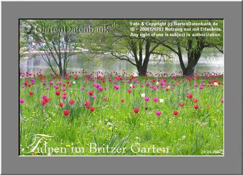 Britzer Garten Tulpen 2018 by Bild Tulpen Tulipa Infos Foto Tulpen Im Britzer Garten