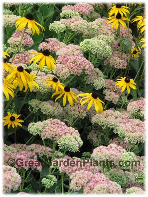37 best images about gardening on pinterest gardens