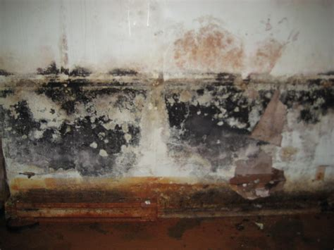 basement mold prevention how to prevent basement mold mold busters